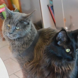 Gandalf à gauche et Neytiri à droite